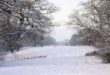 snowy days featured image