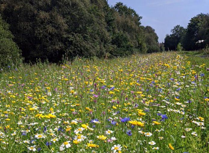 Cow Plantation Nature Reserve wild flowers